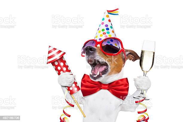 Happy birthday dog picture id492186706?b=1&k=6&m=492186706&s=612x612&h= oypvubwabmzqp2dlemqt4ult bdxvsfunzqg p0eeo=