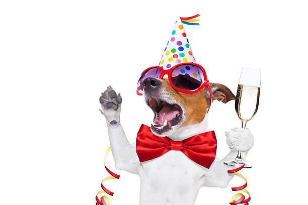 happy geburtstag hund - silvester mit hund stock-fotos und bilder