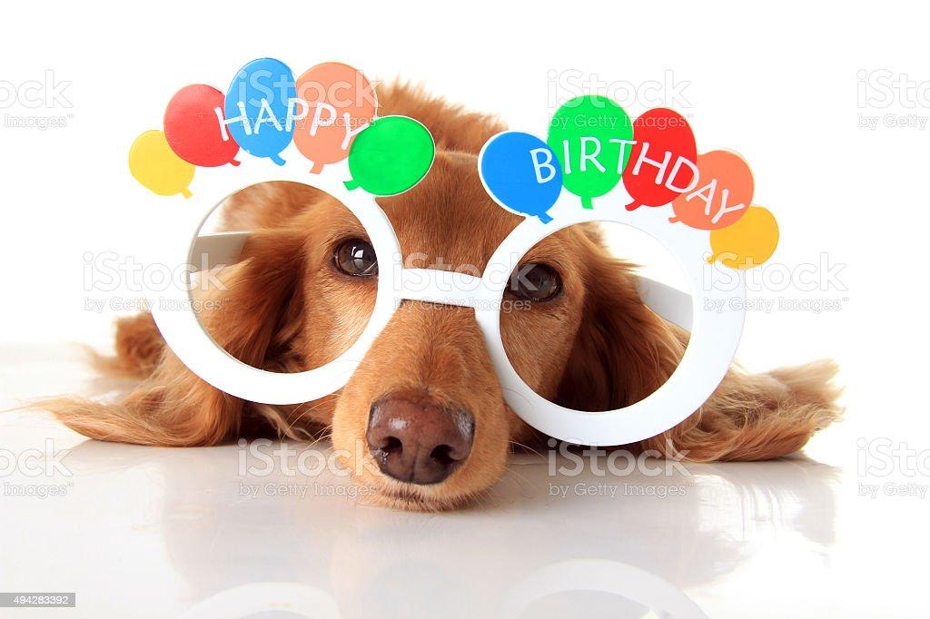 Buon Compleanno Cane Fotografie Stock E Altre Immagini Di 2015