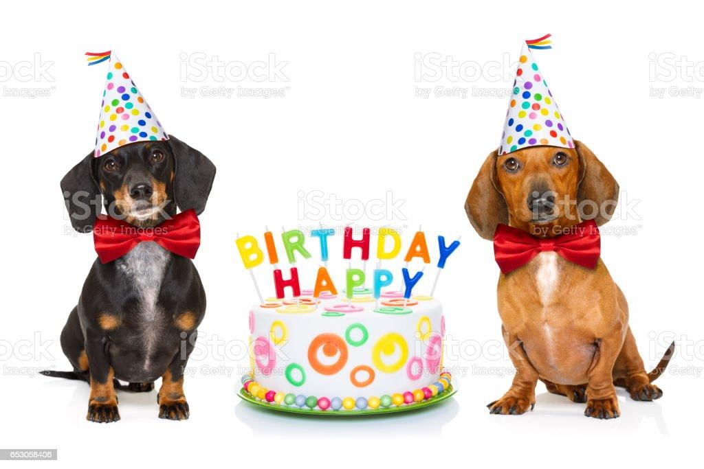 Happy Geburtstag Hund Stock Fotografie Und Mehr Bilder Von Brille
