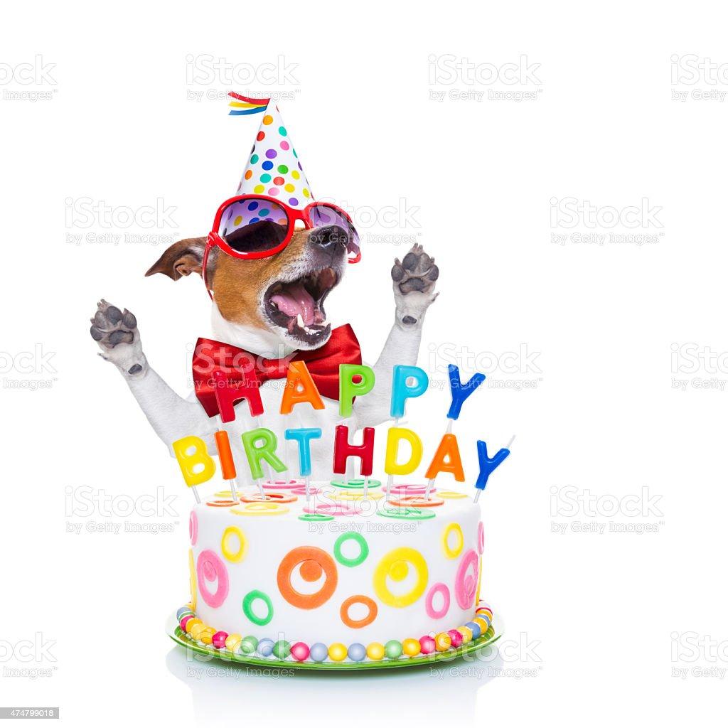 Alles Gute Zum Geburtstag Hund Singen Stock Fotografie Und Mehr