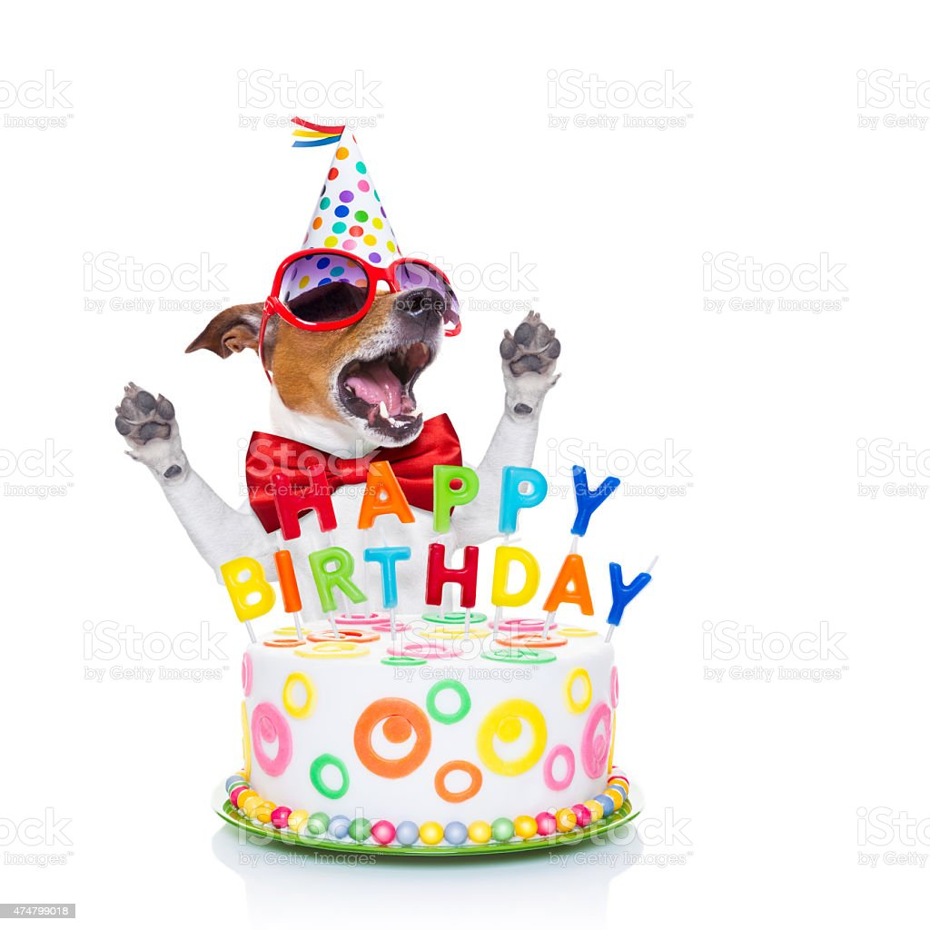 alles Gute zum Geburtstag Hund singen – Foto