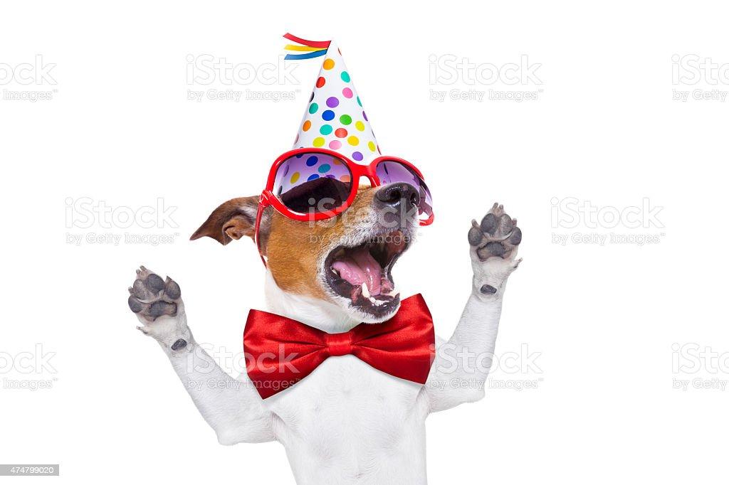 Chien joyeux anniversaire chantant - Photo