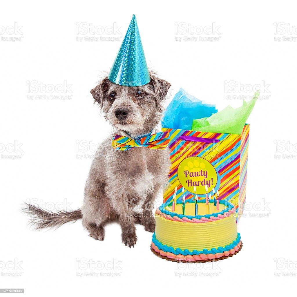 Happy Birthday Party Hund Lizenzfreies Stock Foto