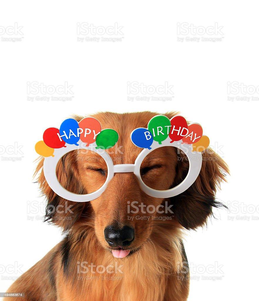 Happy Birthday Puppy Stock Photo Download Image Now Istock