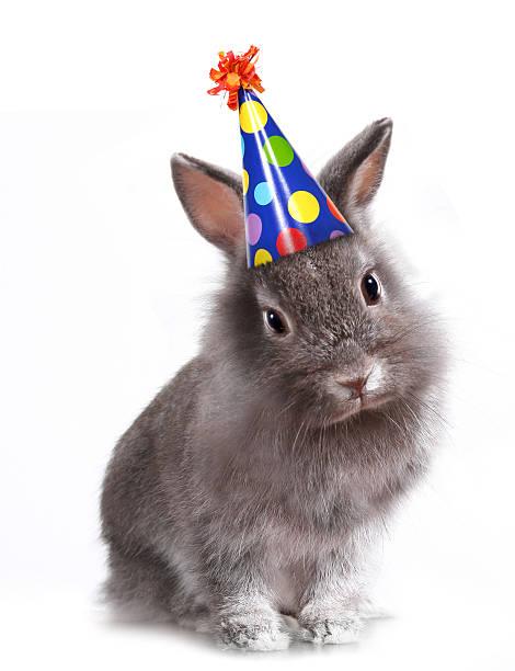 happy birthday rabbit - rabbit animal stock photos and pictures