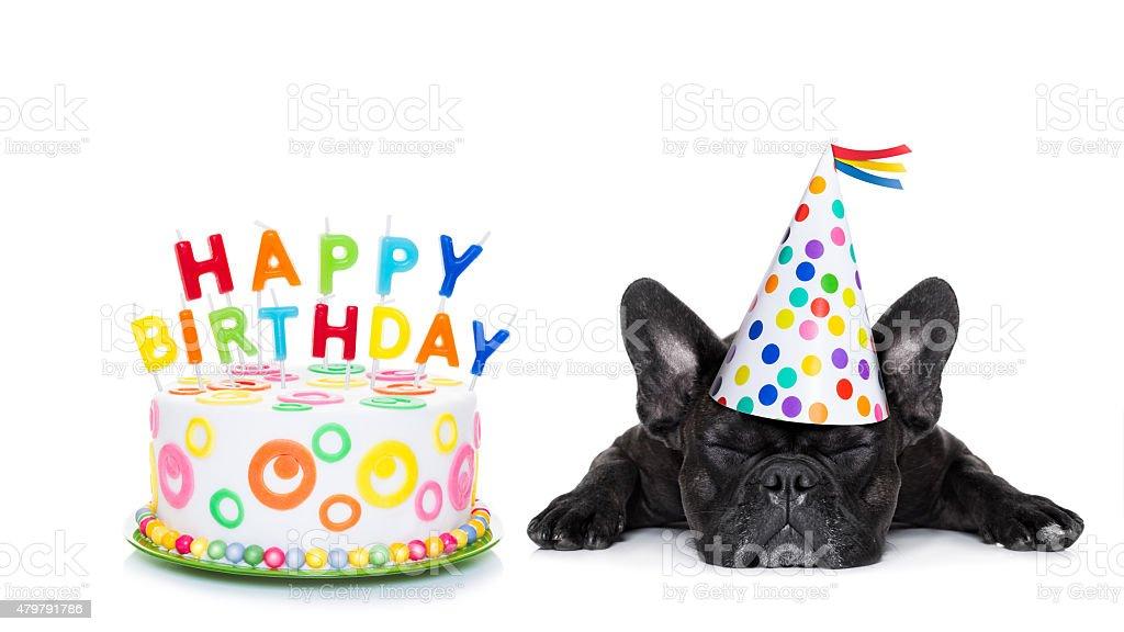 happy birthday sleeping dog stock photo