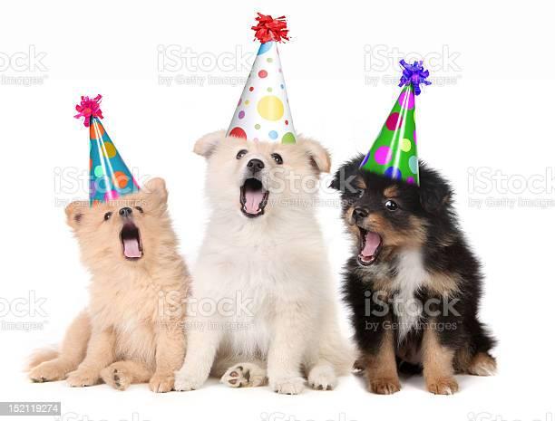 Happy birthday to you picture id152119274?b=1&k=6&m=152119274&s=612x612&h=xngaj bfkd9ppaftmv4mgvtpgfstv6vn4zsfe vq0 q=