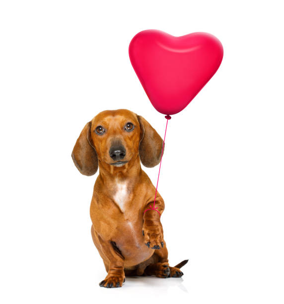 alles gute zum geburtstag valeintines hund - coole liebessprüche stock-fotos und bilder