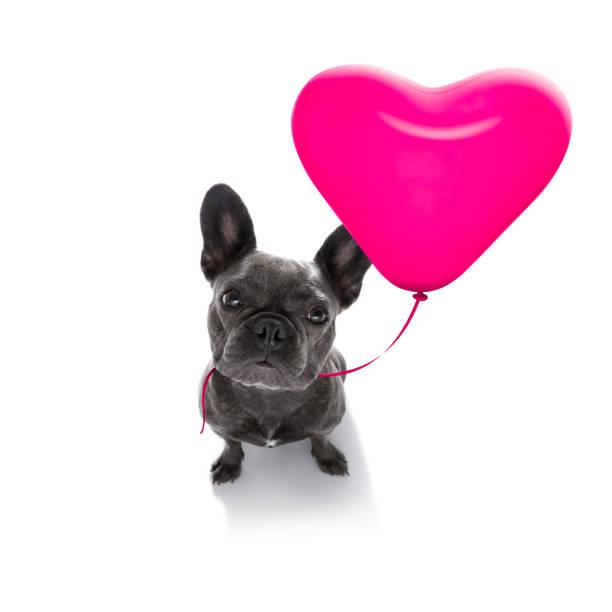 alles gute zum geburtstag valeintines hunde - coole liebessprüche stock-fotos und bilder