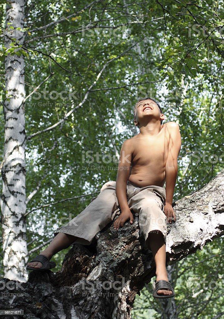 행복함 남자아이 on 자작나무 royalty-free 스톡 사진