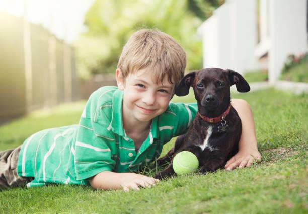 fröhlicher junge mit seinem hund - hunde aus dem tierheim stock-fotos und bilder