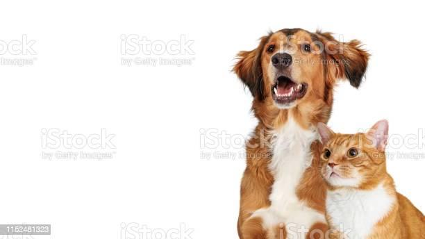 Happy brown dog and orange cat closeup copy space picture id1152481323?b=1&k=6&m=1152481323&s=612x612&h=ossfmic2e4fzqbqitlr12s ob44bmniyqkprizg4hfu=