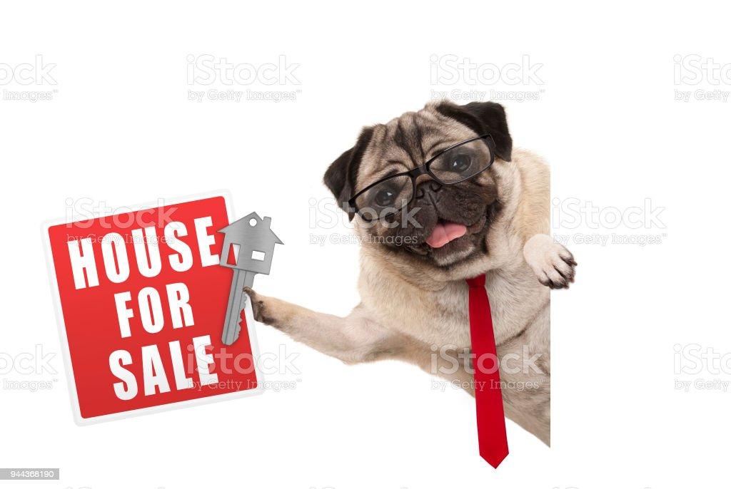 Gelukkig business pug dog witg bril en stropdas, bedrijf in rode huis voor verkoop teken en sleutel foto