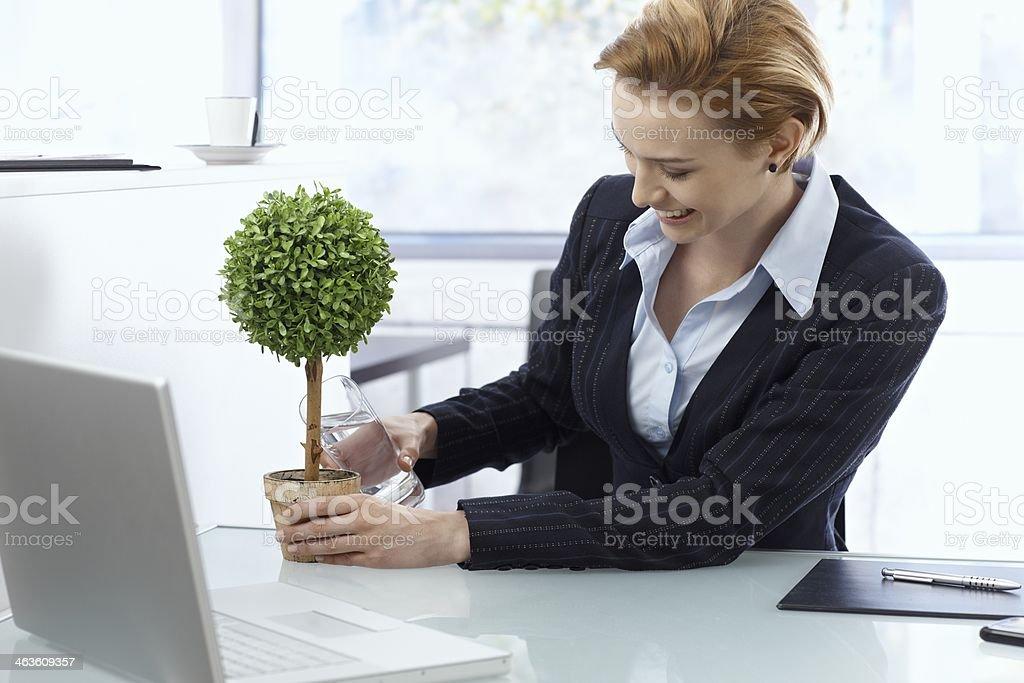 Zufrieden Geschäftsfrau gießen Pflanze im Büro – Foto