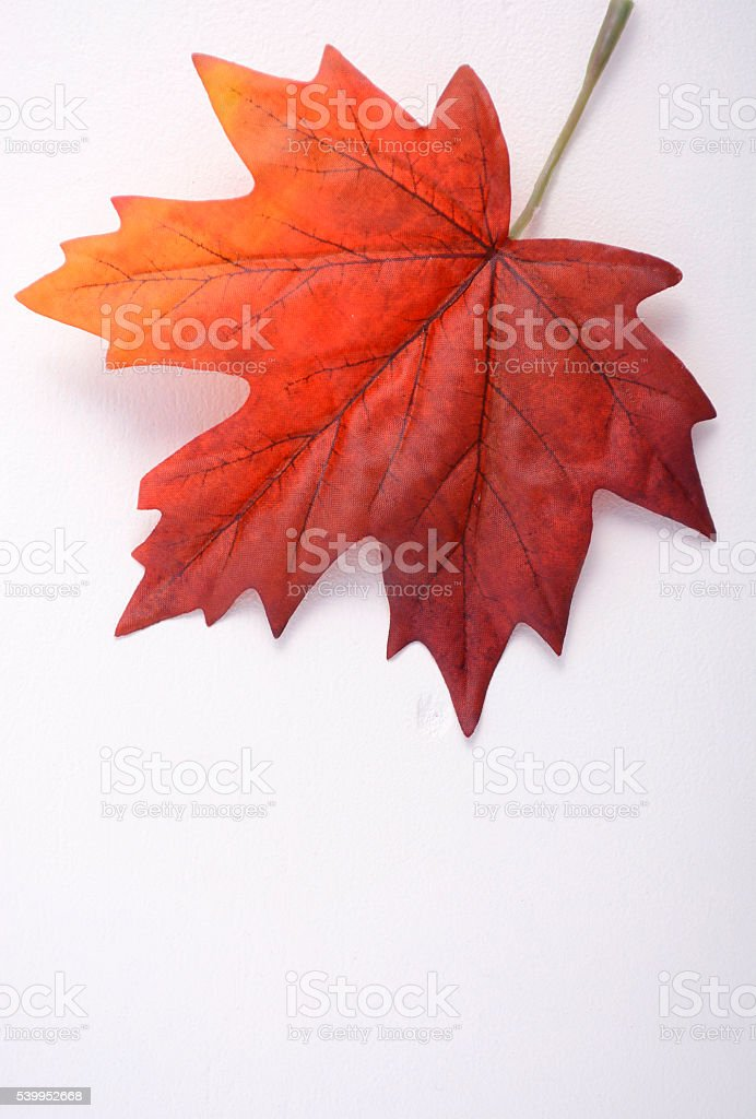 Happy Canada Day Maple Leaf stock photo
