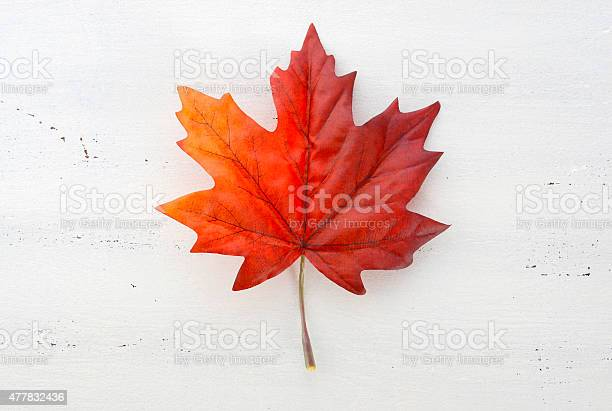 Photo of Happy Canada Day red silk maple leaf