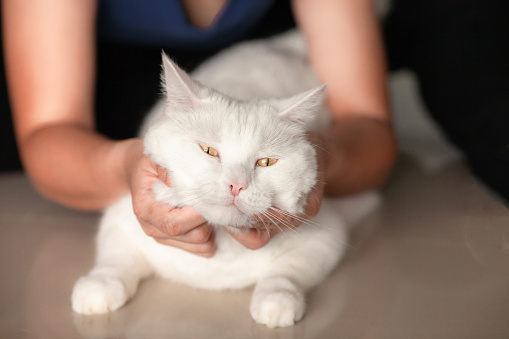 1149249445 istock photo happy cat lovely comfortable sleeping by the woman stroking hand grip at . love to animals concept . 1149248492
