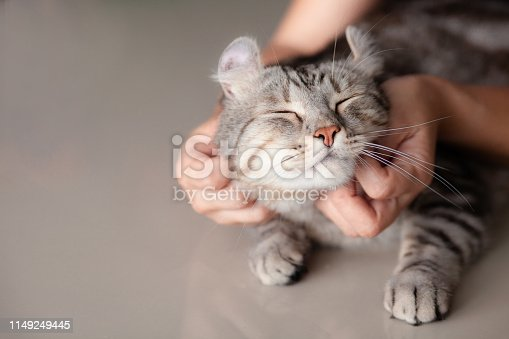 istock happy cat lovely comfortable sleeping by the woman stroking hand grip at . love to animals concept . 1149249445