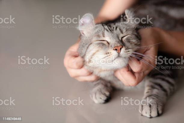 Happy cat lovely comfortable sleeping by the woman stroking hand grip picture id1149249445?b=1&k=6&m=1149249445&s=612x612&h=rvbqmt8w7 gevgtozacupje5amayw9lvyrcyy55kjds=
