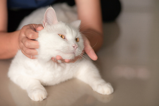 1149249445 istock photo happy cat lovely comfortable sleeping by the woman stroking hand grip at . love to animals concept . 1152380715