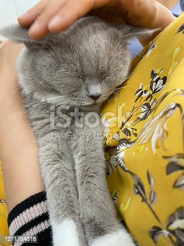 Happy cat lovely comfortable sleeping by the woman stroking hand grip at . love to animals concept