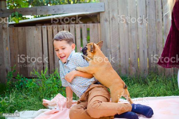 Happy caucasian boy playing with puppy french bulldog puppies picture id853173778?b=1&k=6&m=853173778&s=612x612&h=xuen2iybbt6u0mq0jvapaewkvcvfgbrqi1bnofaflp8=