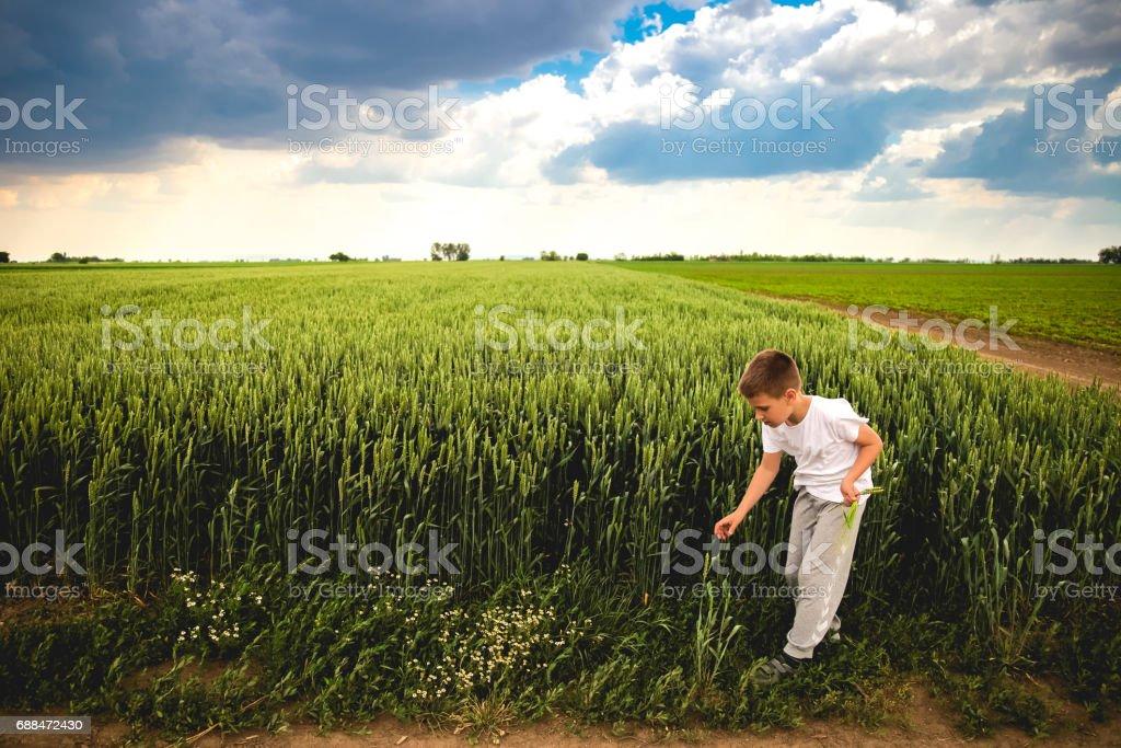 Happy child exploring green wheat field stock photo