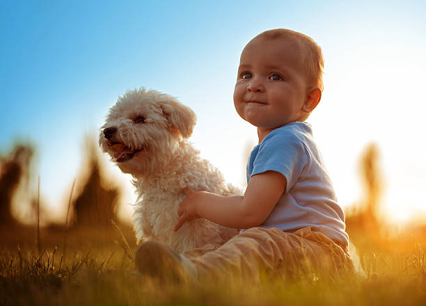 Happy child playing with his dog picture id576891456?b=1&k=6&m=576891456&s=612x612&w=0&h=3vmfx6cy11wlt kb86m r5kpl4p9fw9aetvjgz1e838=