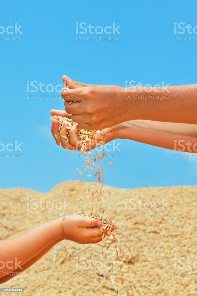 Happy child with mother on heap of rice grains crop. stock photo
