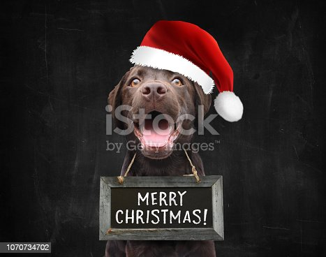 istock Happy christmas dog with santa claus hat wishing everyone a merry christmas black background 1070734702