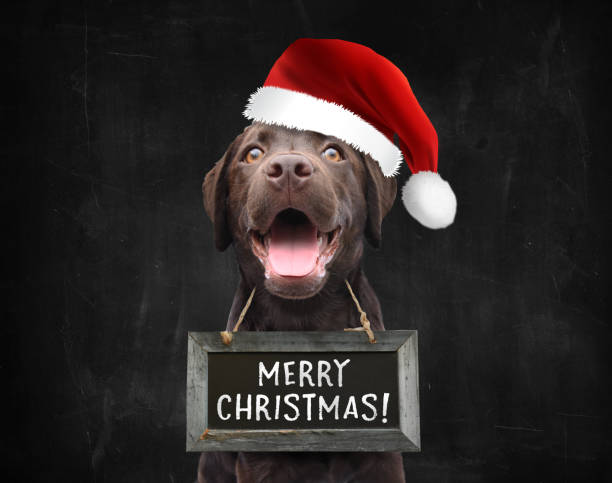 Happy christmas dog with santa claus hat wishing everyone a merry christmas black background stock photo