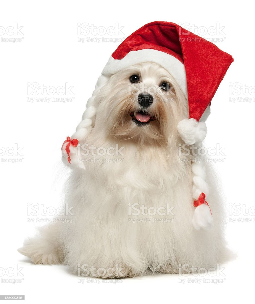 Download Happy Christmas Dog