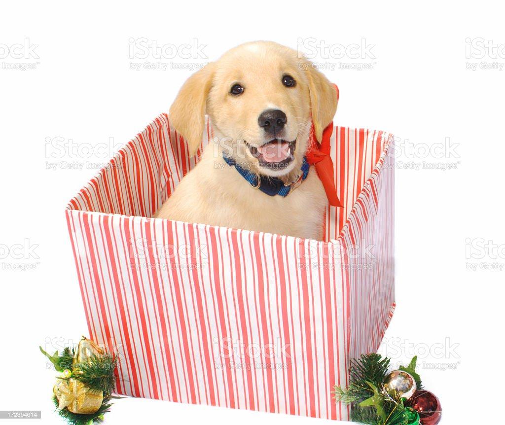 Feliz navidad cachorro foto de stock libre de derechos