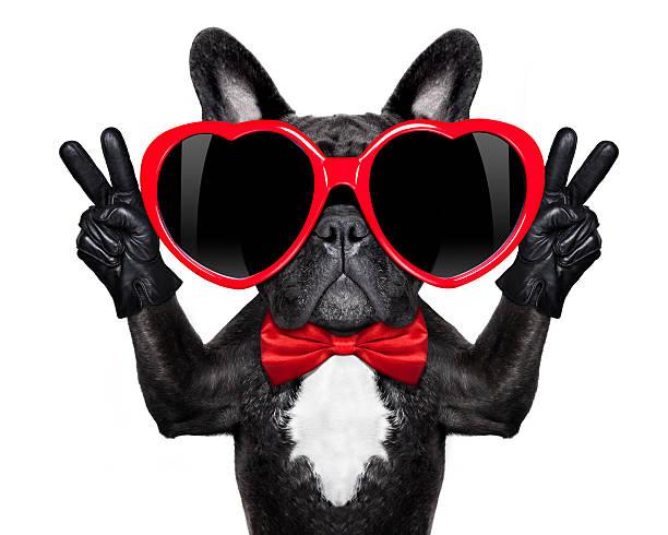 happy cool hund - coole liebessprüche stock-fotos und bilder