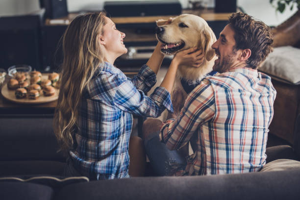 Happy couple enjoying with their golden retriever in the living room. stock photo