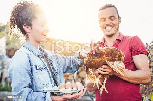 Happy couple of agriculturist picking up fresh eggs in henhouse farm at sunset - Young farmers working in the factory house - Concept of people grower breeding production, vegetarian and agriculture