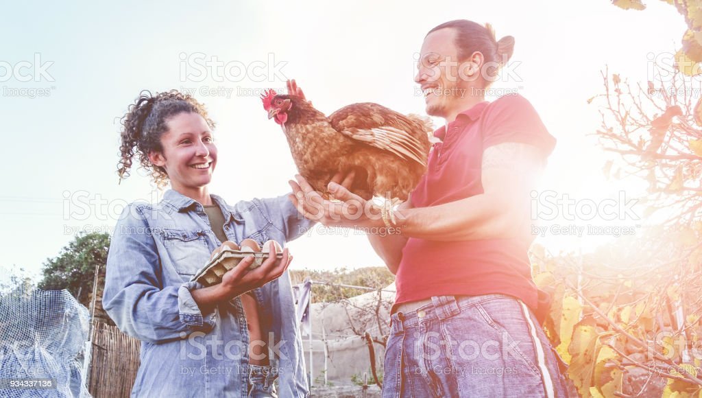 Happy couple picking up fresh organic eggs in henhouse farm at sunset - Young farmers working in summer time - Healthy lifestyle, love, agriculture stock photo