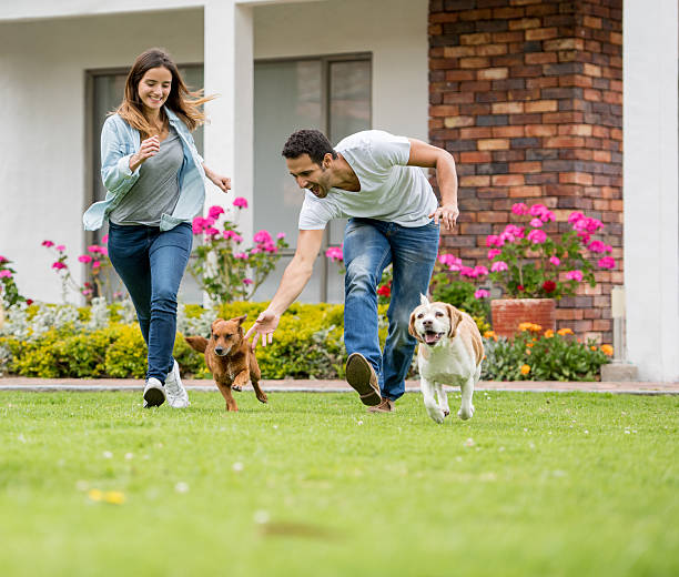 Happy couple playing with their dogs picture id608004458?b=1&k=6&m=608004458&s=612x612&w=0&h=ugc7riqqdsr0nuaiswdu6wfsgywggvqwzaxnfnqzuoa=