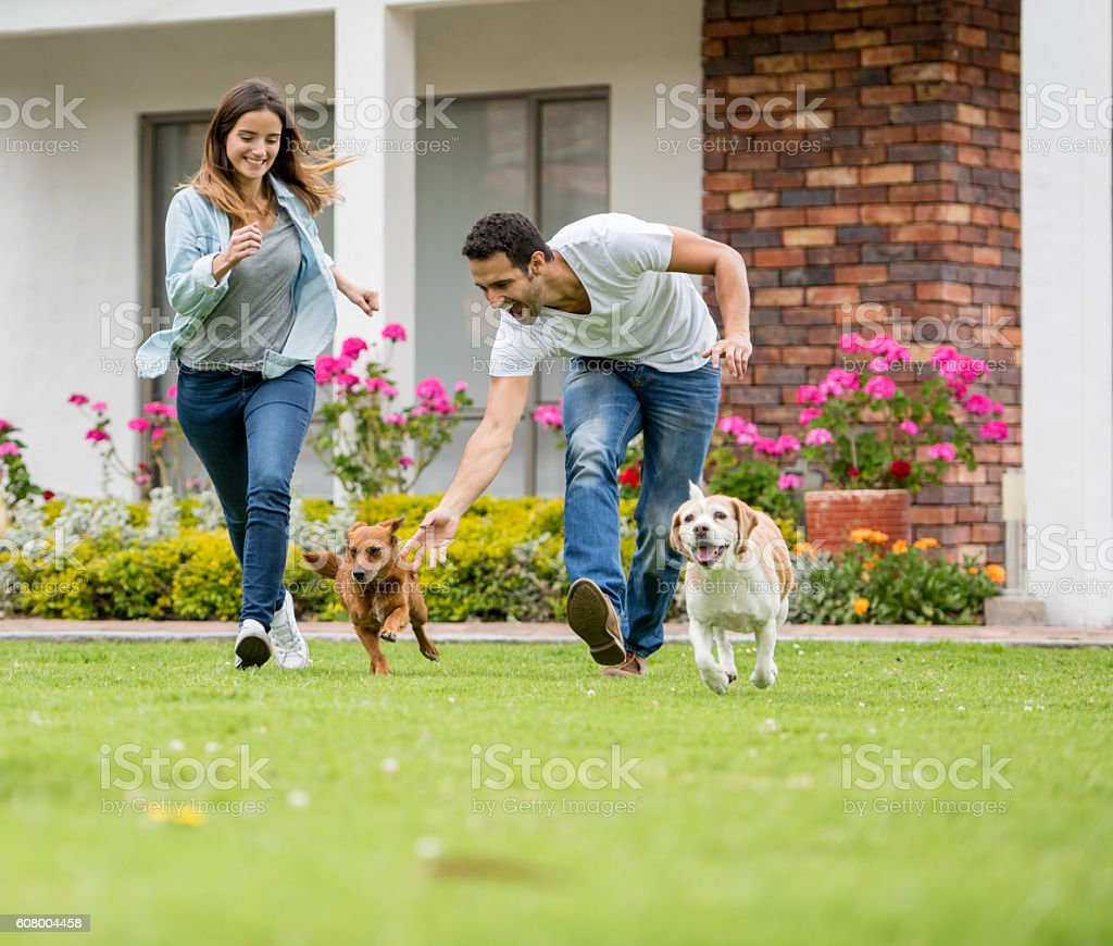 Happy couple playing with their dogs stock photo