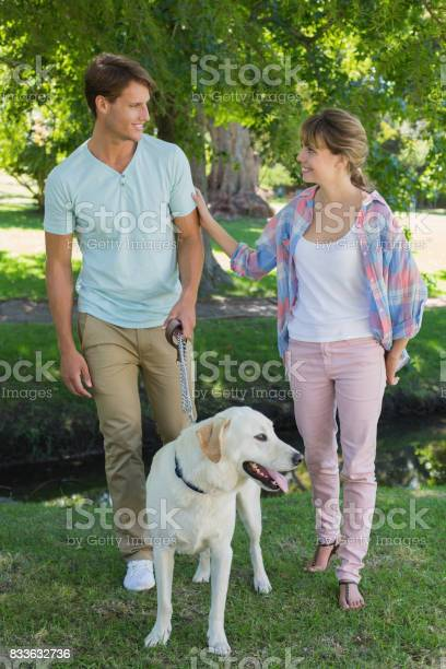 Happy couple walking with their labrador in the park picture id833632736?b=1&k=6&m=833632736&s=612x612&h=2ogi1scmmpq6yf3uho8t 7chlua9icfhtcnyhicja2k=