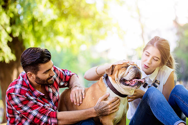 happy couple with their dog - happy pets stock photos and pictures
