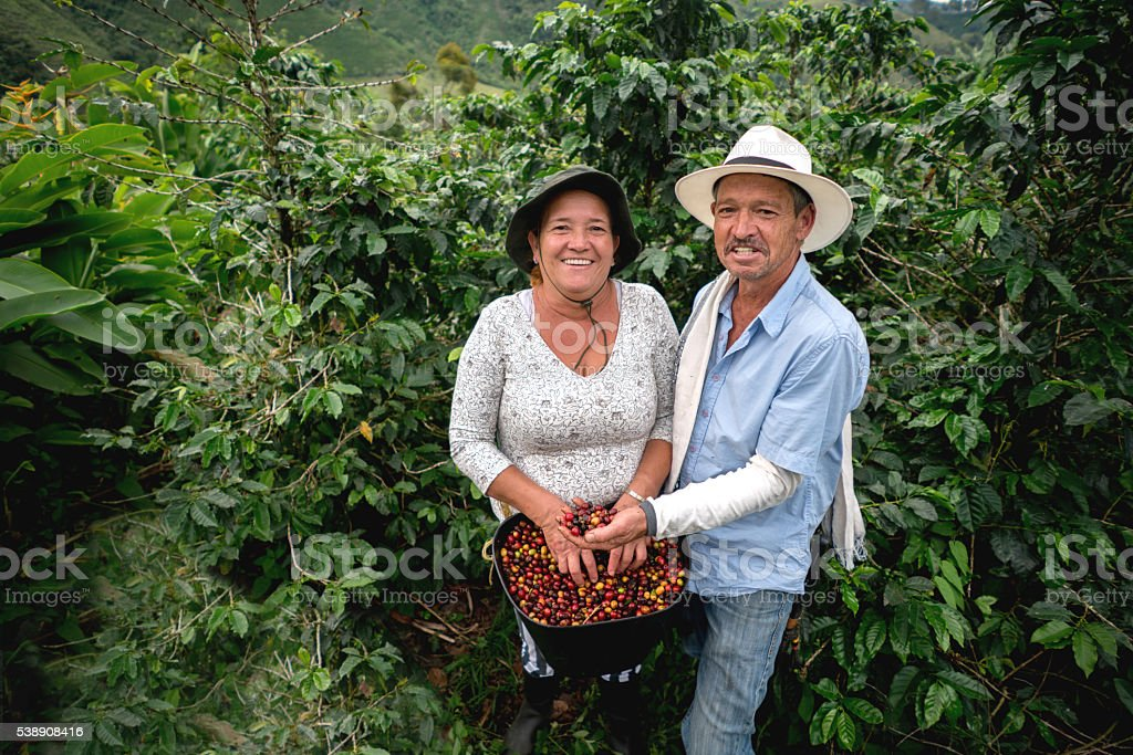 Happy couple working at a coffee farm stock photo