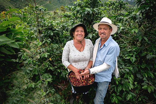 happy couple working at a coffee farm - coffee farmer foto e immagini stock