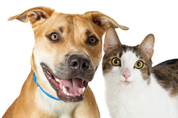 Happy crossbreed cat and dog together picture id671075220?b=1&k=6&m=671075220&s=612x612&w=0&h=ptxql65ri68dp 2sqtzcaldk7px3qdtlwvmrb6oga5w=