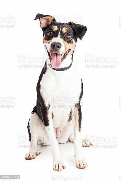 Happy crossbreed dog sitting mouth open picture id488413224?b=1&k=6&m=488413224&s=612x612&h=h8g l8skqnl j6bti rb6kpgiv0 yble94fsnsql8iw=