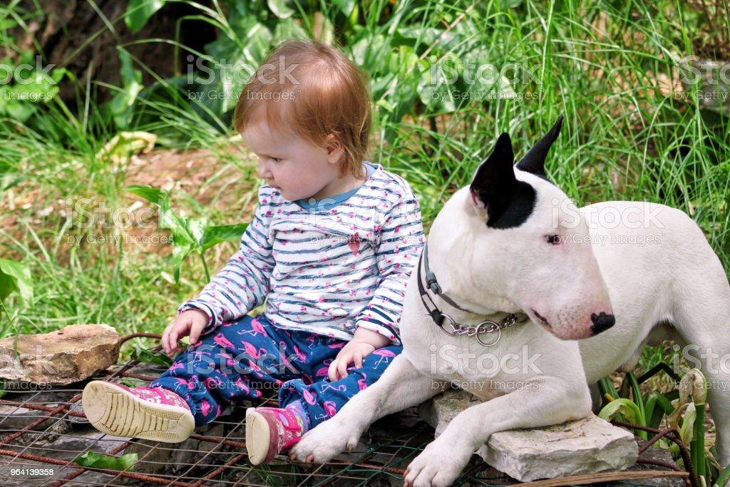 Cachorro e bebê feminino bonito feliz está sentado no jardim. Criança está brincando com o cão inglês Bull Terrier branco lá fora no parque. Uma menina e seu cão, rodeada por arbustos e árvores verdes. - foto de acervo