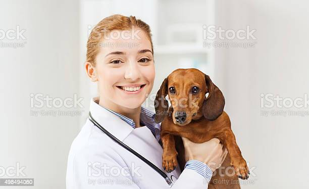 Happy doctor with dog at vet clinic picture id498494080?b=1&k=6&m=498494080&s=612x612&h=g1cwhhyggzp0nnuhk64ovbztzarx44thjdalgpet6fw=