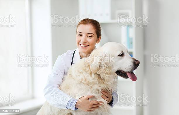 Happy doctor with retriever dog at vet clinic picture id540119230?b=1&k=6&m=540119230&s=612x612&h=803gpborh4fmwd6eplbee tmilqqswajgeiqych8jog=