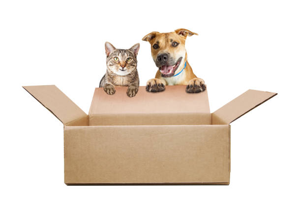 Happy dog and cat over empty shipping box picture id902009856?b=1&k=6&m=902009856&s=612x612&w=0&h=xgif l7yqucluobs24bnsq8oo 9hl8ppujijs1hwjuq=